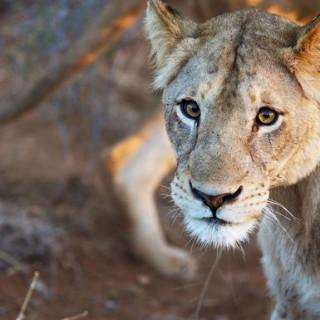 Mosambik Gruppenreise 2021 | Erlebnisreisen-afrika.de
