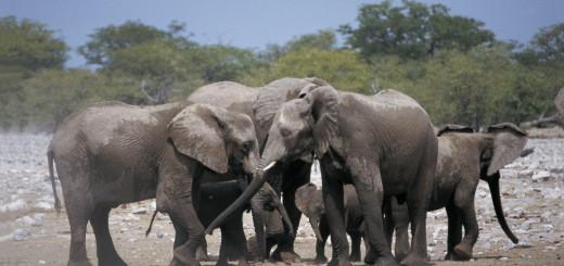 Elefanten im Krüger NP 2021 | Erlebnisrundreisen.de