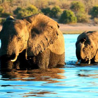 Begegnung im Chobe-Nationalpark - Alina Kirsten | erlebnisreisen-afrika.de