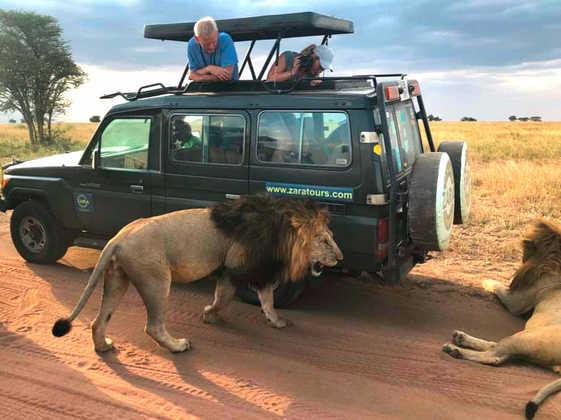 Löwen in der Serengeti - Alina Kirsten   erlebnisreisen-afrika.de