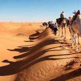 Kamelkarawane auf der Düne - Hartmut Bartelt | erlebnisreisen-afrika.de