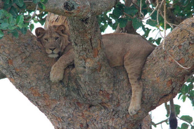 Mburo NP - Juan Dobler | erlebnisreisen-afrika.de