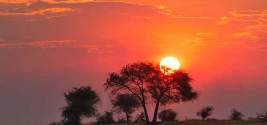 Sonnenuntergang im Chobe-NP - Lena Bohndorf   erlebnisreisen-afrika.de