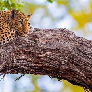 Rundreise Botswana, Südafrika & Simbabwe 2021 / 2022   Erlebnisreisen-Afrika.de