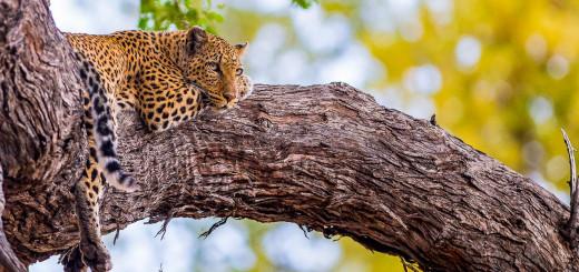 Rundreise Botswana, Südafrika & Simbabwe 2021 / 2022 | Erlebnisreisen-Afrika.de
